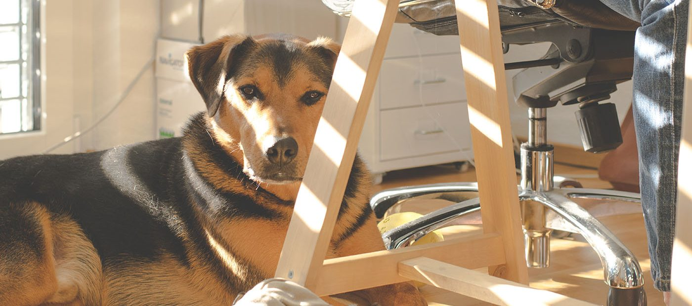 Do office pets have a positive impact on work-related stress?